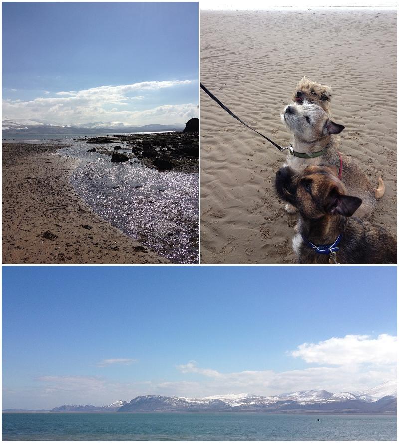 Sun, beachs and doggies waiting for treats
