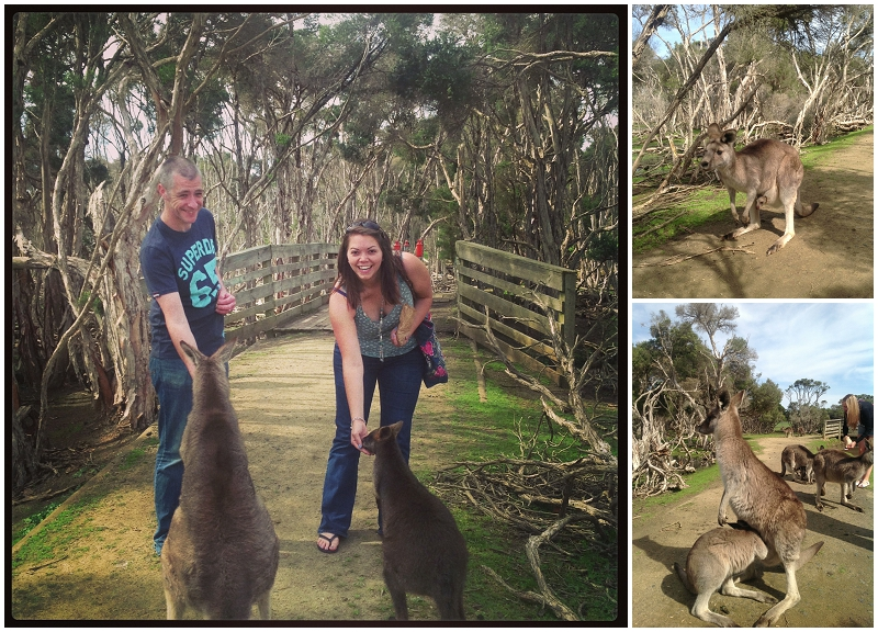 We fed kangaroos!